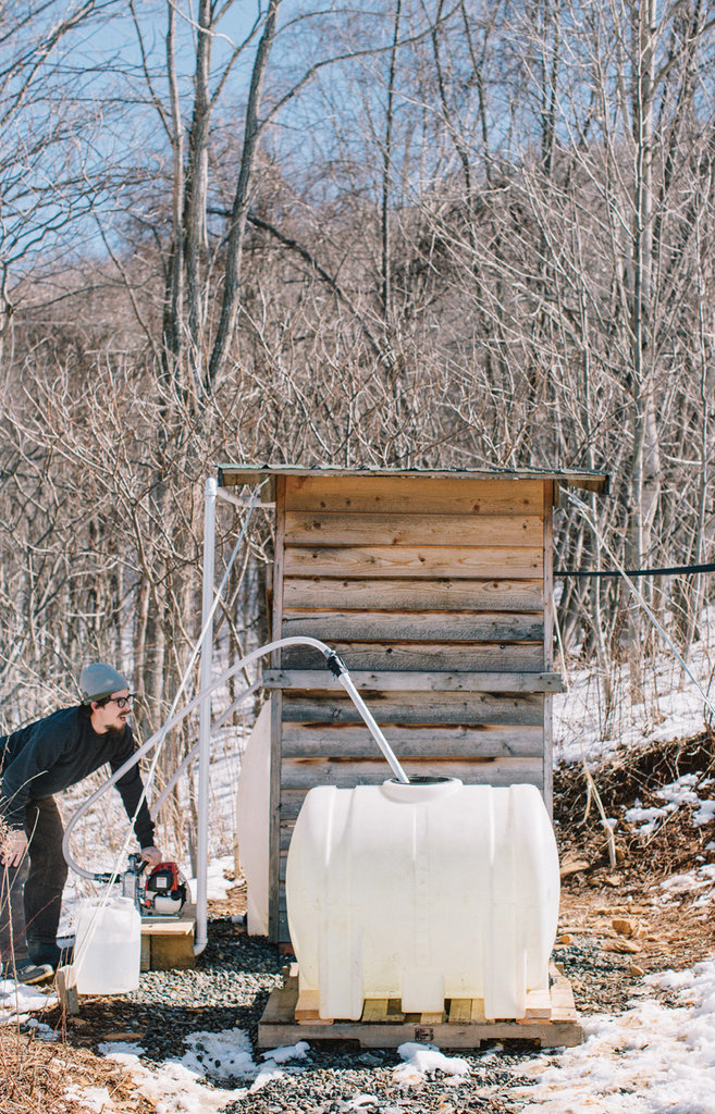 The process involves tapping trees and setting up tubing to transfer the sap to the evaporator.