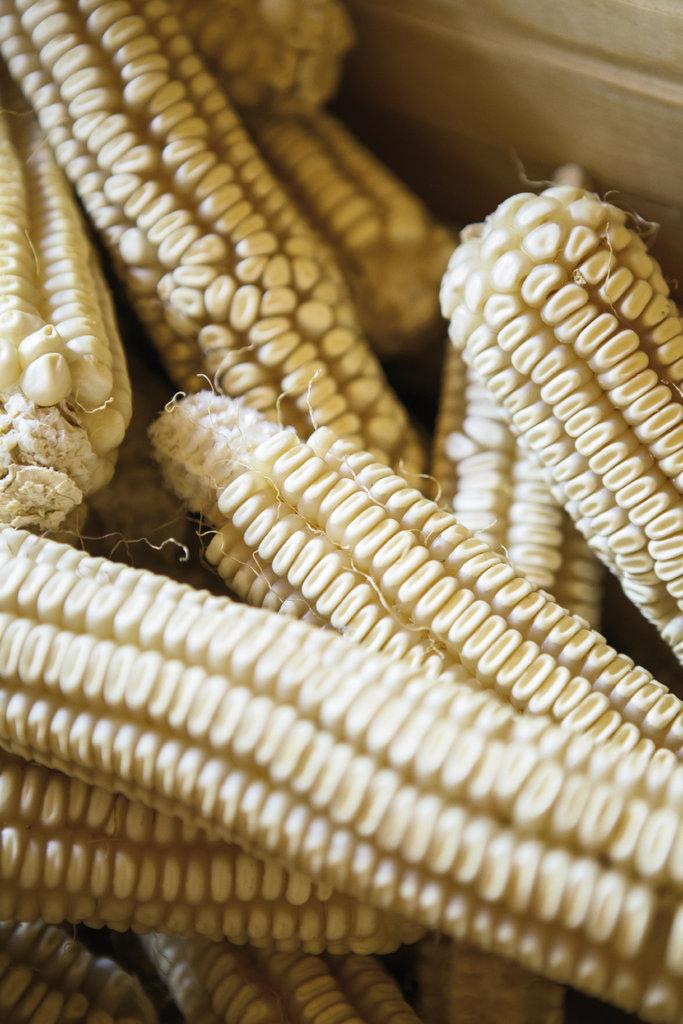 The Barkley family grows Hickory King white heirloom corn on Southern Cross Farm in Barnardsville.