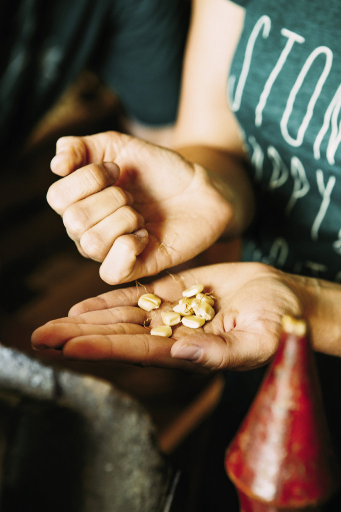 5. At almost every stage in the process, the corn is inspected for quality.