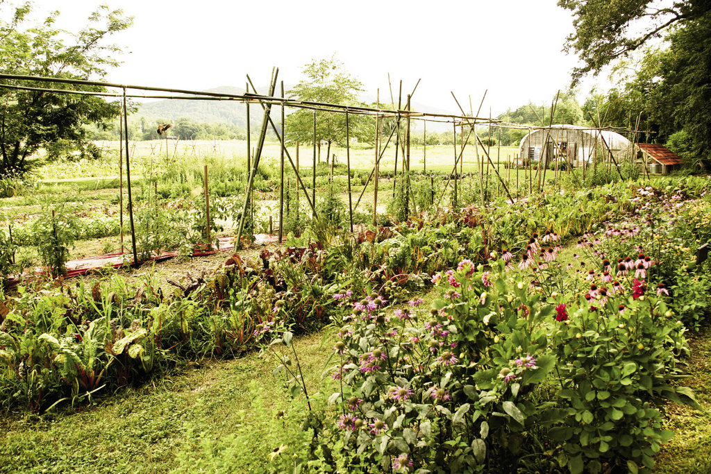 Harvests from the vegetable gardens, tended by work-study students, contribute to the meals.