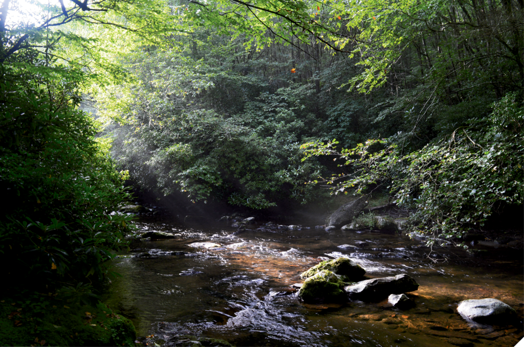 Top WNC Fly Fishing Spots:  1. Big Snowbird Creek