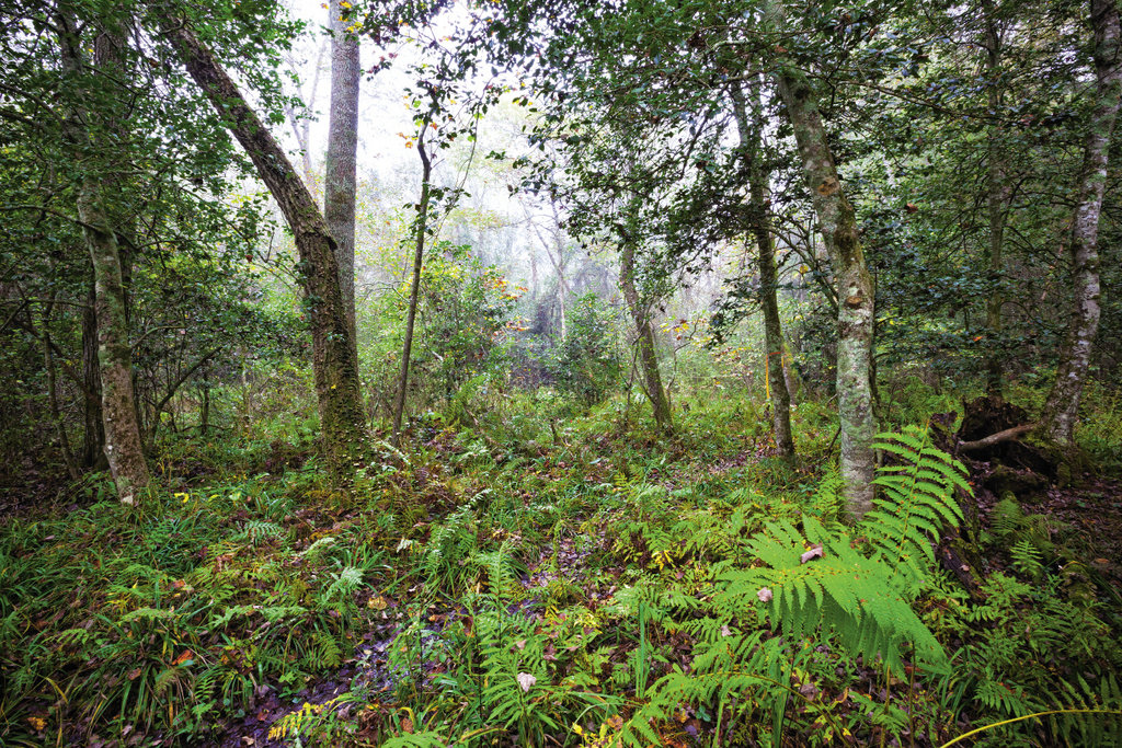 It's believed that 200 years ago, there were as many as 5,000 acres of bogs across Southern Appalachia. Only about 500 acres remain today.