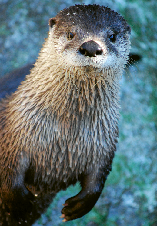 Grandfather Mountain features an animal habitat with otters, eagles, and more, as well as a nature museum.