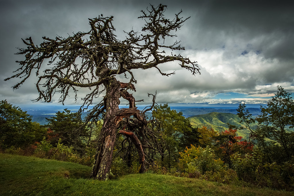 Honorable Mention: Gnarled Centurion by Greg A. Kiser (Professional category)