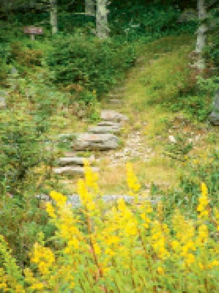 Mount Mitchell State Park: Mount Mitchell Trail