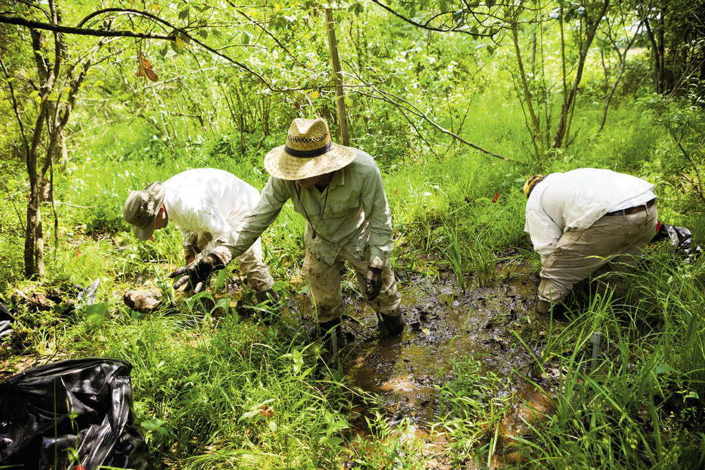 To ensure the health of the rare inhabitants, woody vegetation and nonnative plant species are identified and cleared by volunteers.