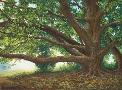 "John Mac Kah, Swannanoa, The Grandmother Tree oil on canvas, 24"" x 18"""