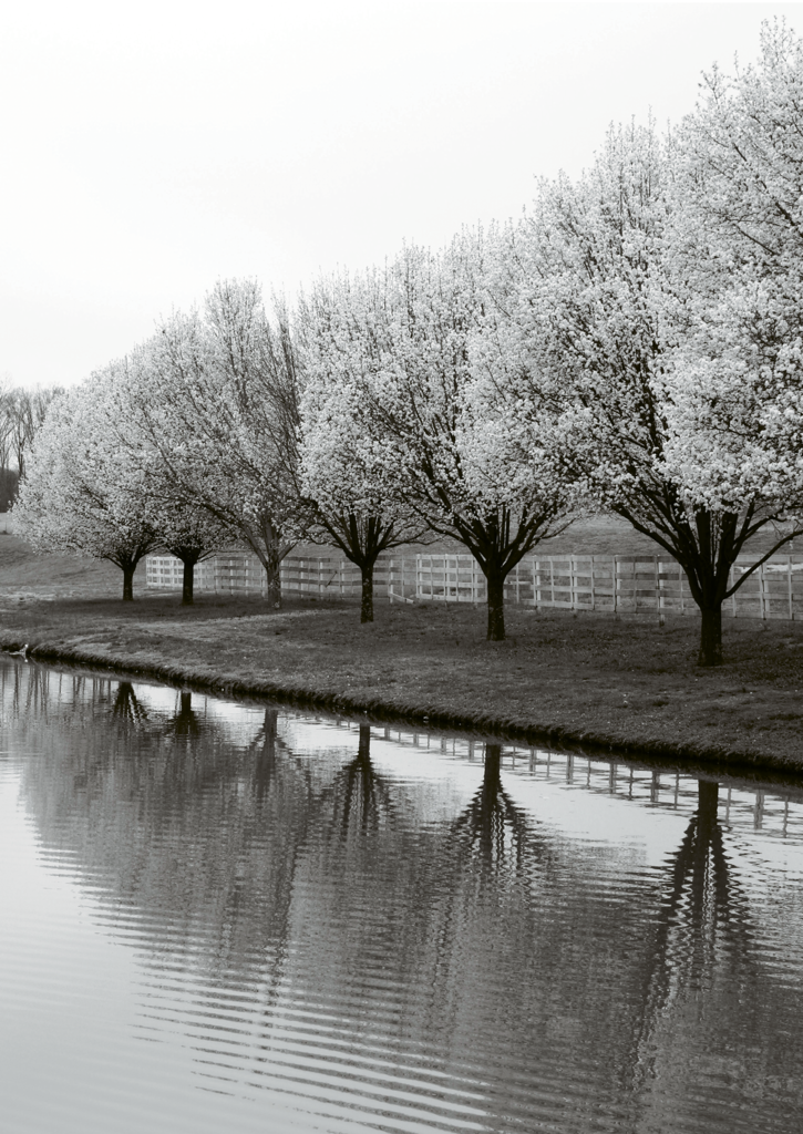 Paige Anderson, Blooming pear trees on a farm in Catawba County Amateur category