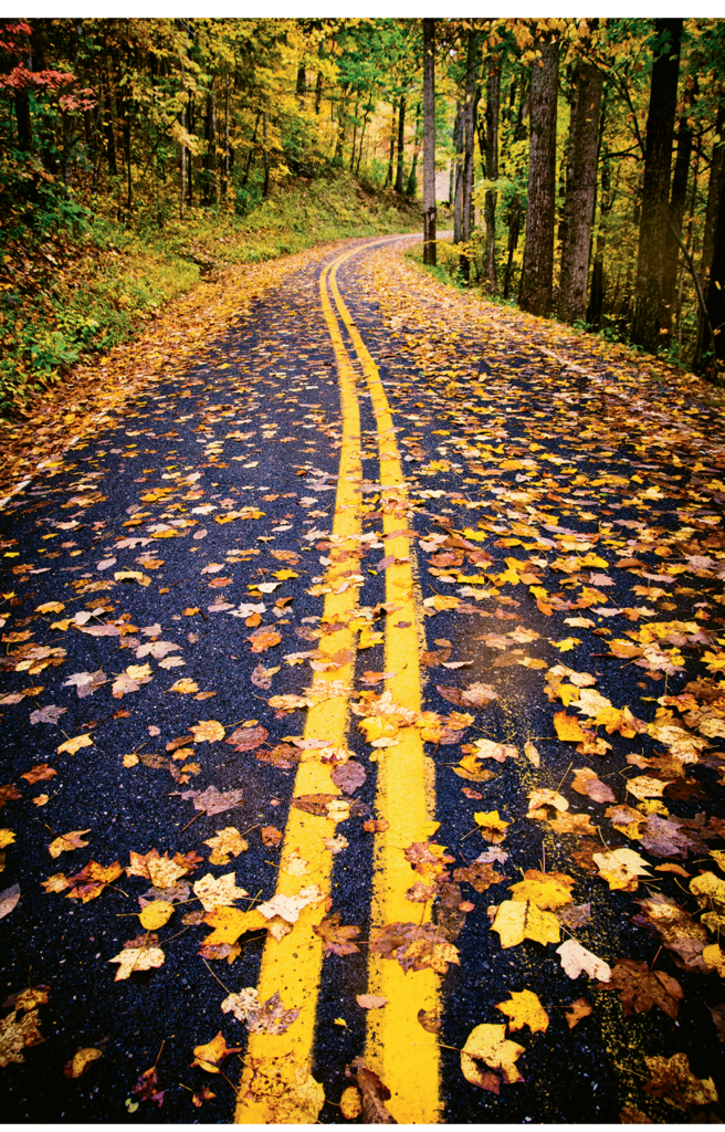 Max Cooper, Fall leaves blanket White Oak Road, located in the shadow of Mt. Mitchell. Professional category