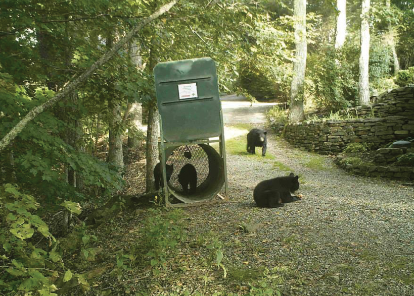 Bears in the study were lured by bate into traps like this without harm then sedated, affixed with radio collars, recorded, and sent on their way to see where they go.