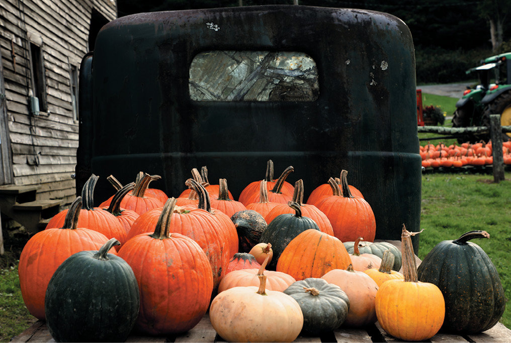 In addition to an eight-acre u-pick patch, the farm also grows and sells pre-cut pumpkins.