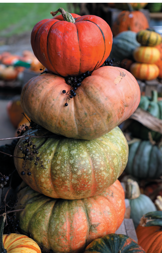 Choose from 40 varieties of mini and heirloom pumpkins, gourds, and traditional jack-o'-lantern pumpkins.