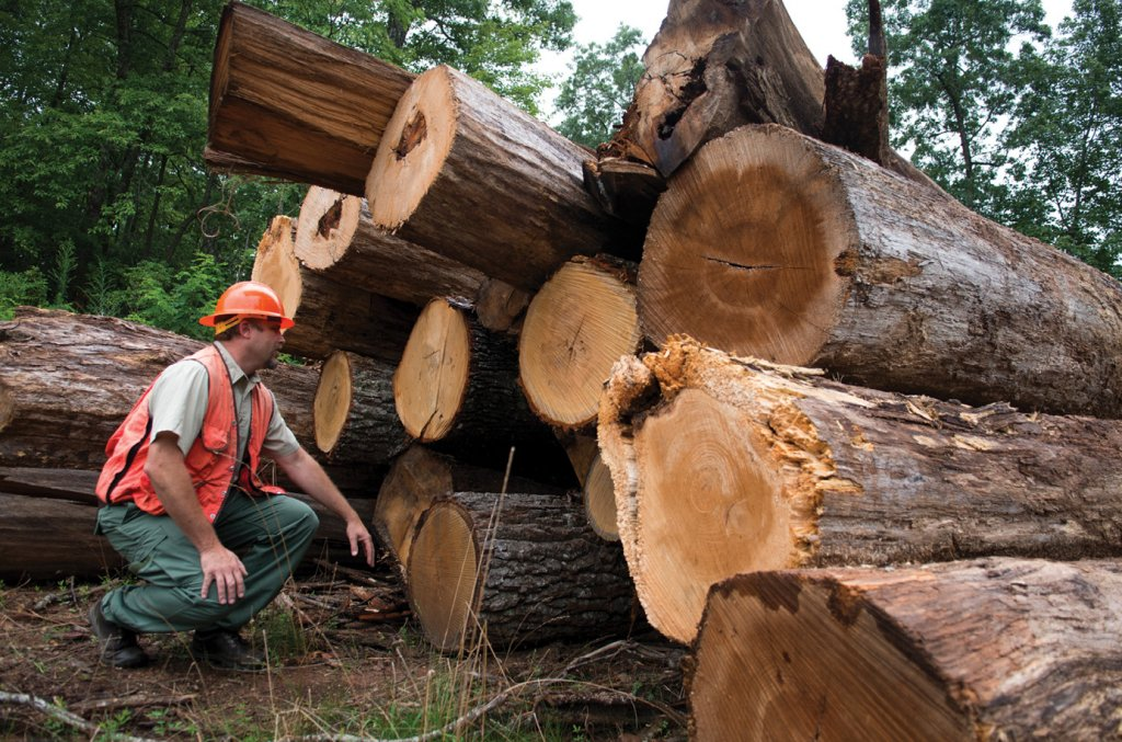 Patrick Scott, a Forest Service fire management officer, inspects timber at a sale in the North Mills Area of Pisgah National Forest.