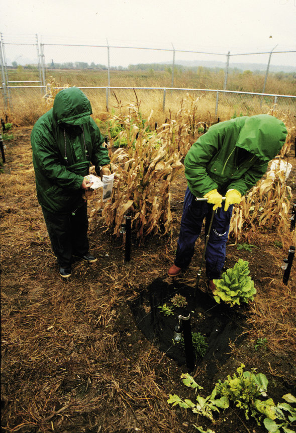 Between 1990 and '93, the plants were tested annually for toxin levels.