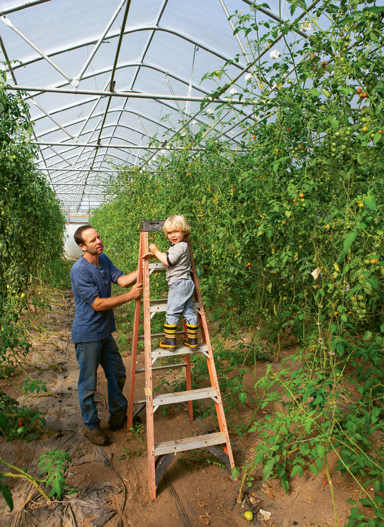 Paul Littman and son, Abe, tend to the organic tomatoes in the hoop house.