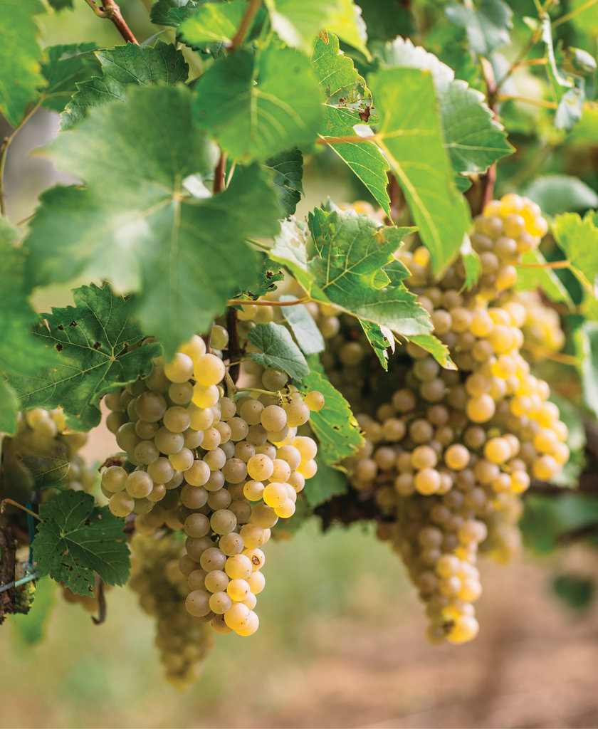 Our guide to WNC wine includes 34 wineries and vineyards.
