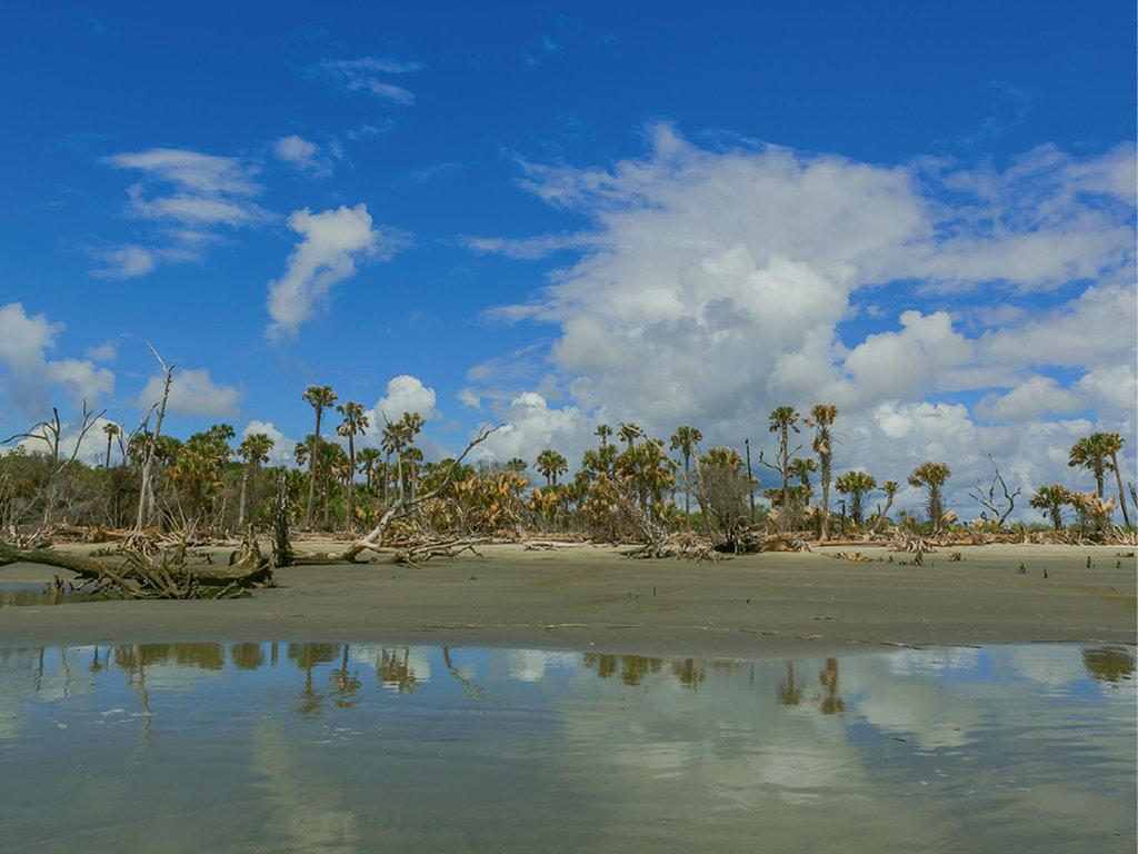 Bulls Island