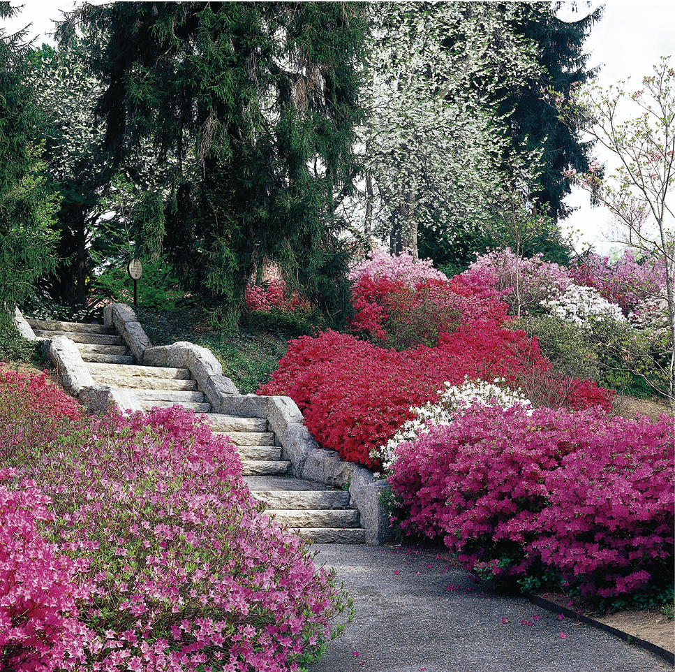Biltmore blooms: The 15-acre Azalea Garden, the largest garden on the estate, was designed by Olmsted and cultivated by famed horticulturalist Chauncey Beadle.