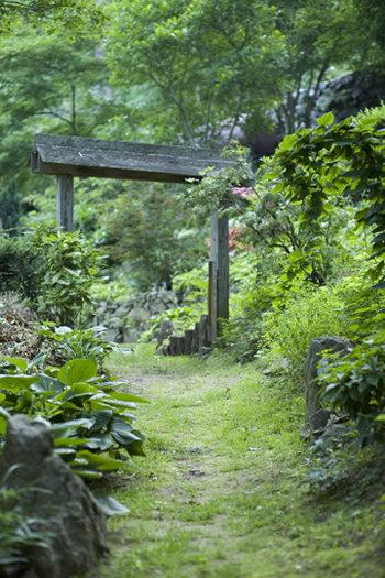 The Gentling's garden