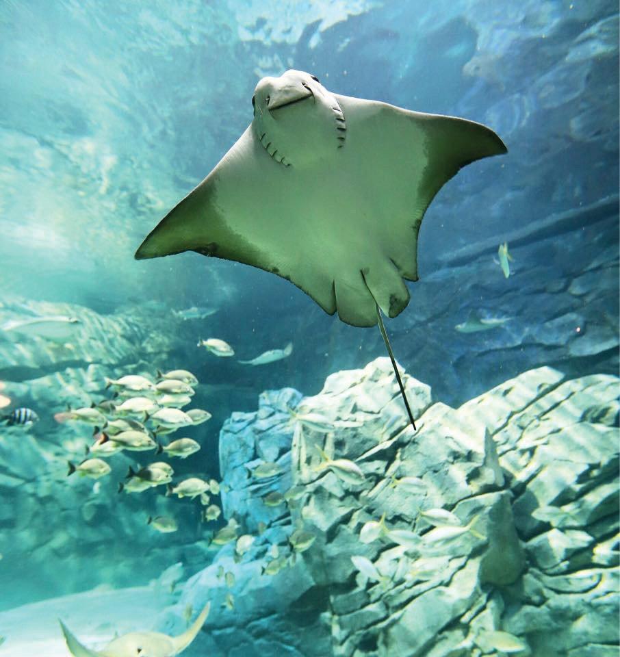 Ripley's Aquarium of the Smokies