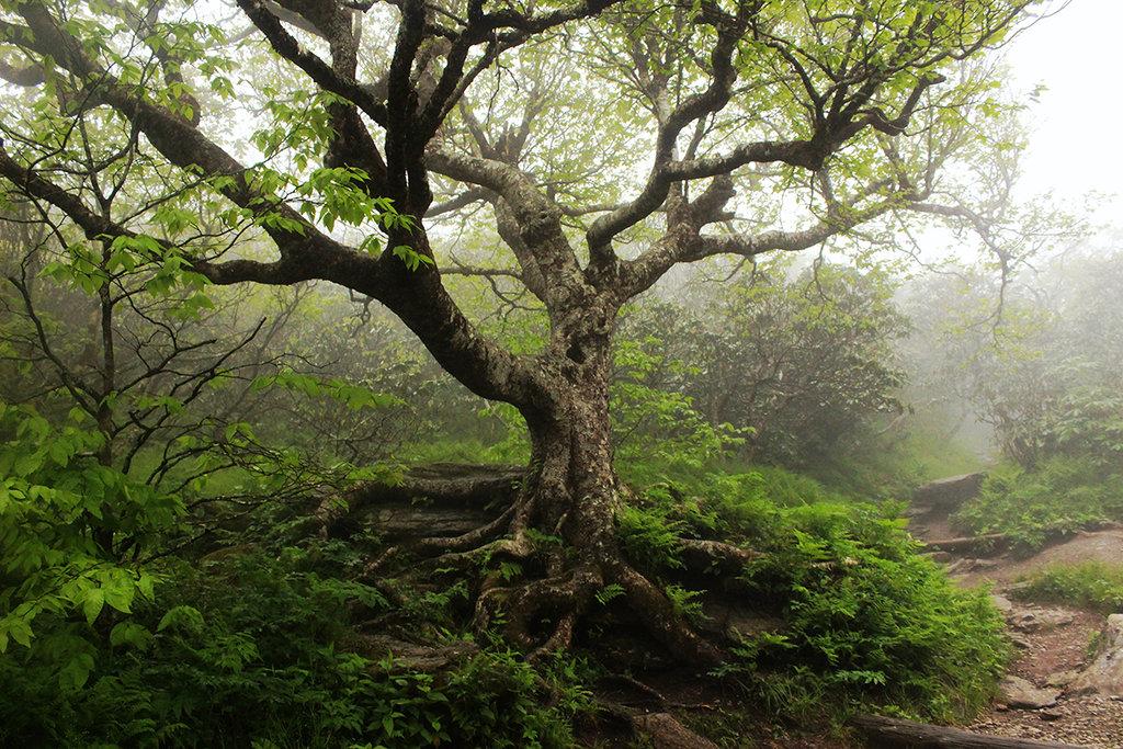 Honorable Mention: Through the Mist by Rachel Crisp (Amateur category)