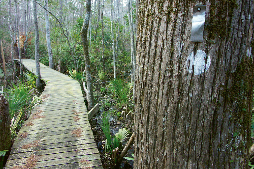 Segment 16 - Bridge Over Troubled Water In the east, the MST cuts through the 161,000-acre Croatan National Forest, home to pocosin wetlands and rare long-leaf pine forests. The metal tags are trail blazes set in place to withstand forest fires.