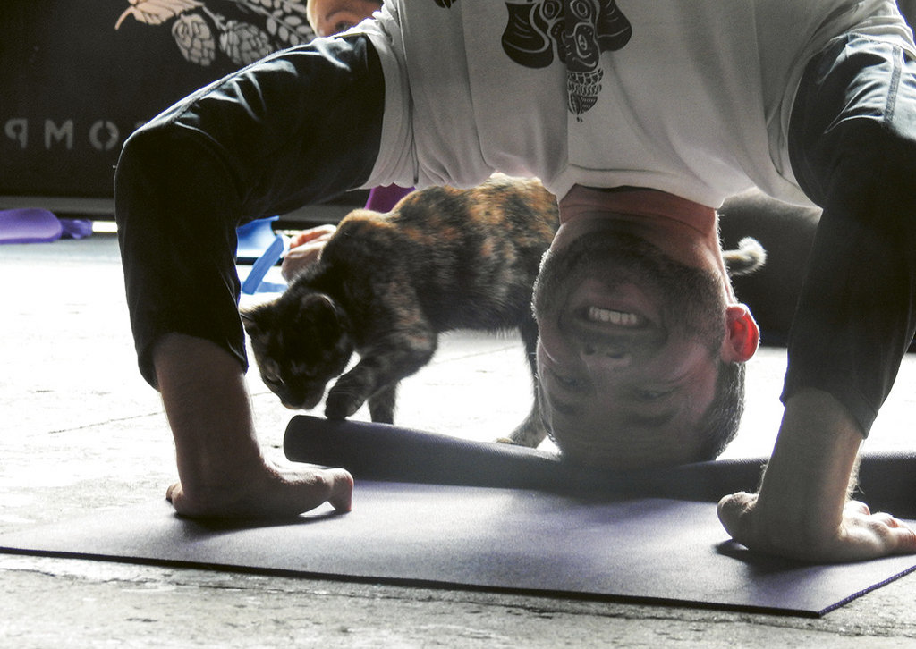 Yoga with cats at Sanctuary Brewing