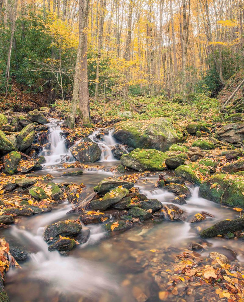 Off the Beaten Path - Encompassing 7,900 acres within Pisgah National Forest south of Waynesville, the remote Middle Prong Wilderness rewards anglers with nine miles of trout streams