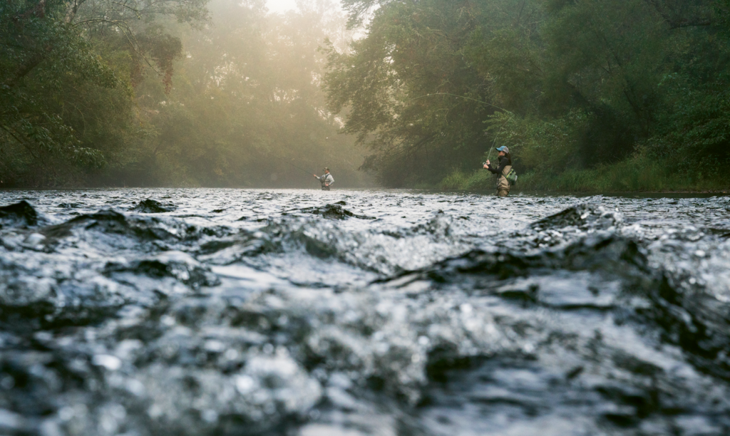 Anglers are drawn to the French Broad's abundance of fish, including trout, muskie, catfish, suckers, and white, spotted, and smallmouth bass.