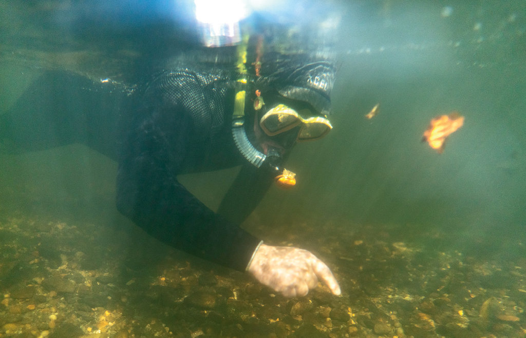 OUT OF THIS WORLD - Merrill says he's constantly amazed by the variety of what he finds in the relatively shallow French Broad River, one of several waterways where he regularly takes people snorkeling.
