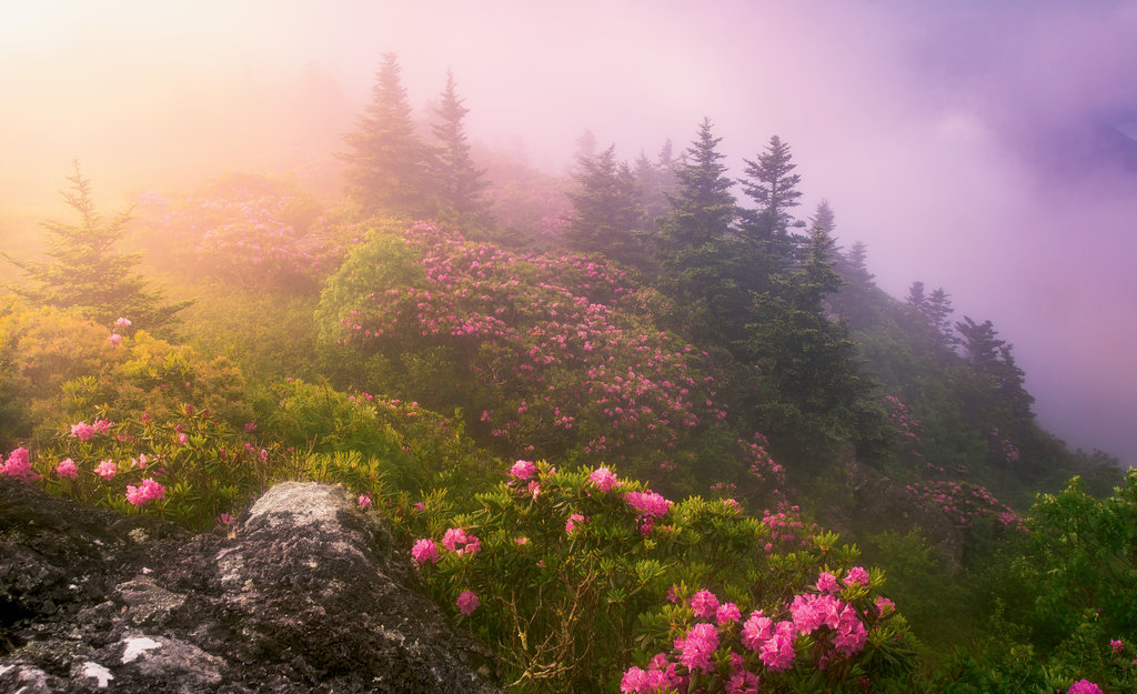 1st PLACE  AMATEUR  CATEGORY  Top of the Mornin' by J Smilanic (Amateur category)