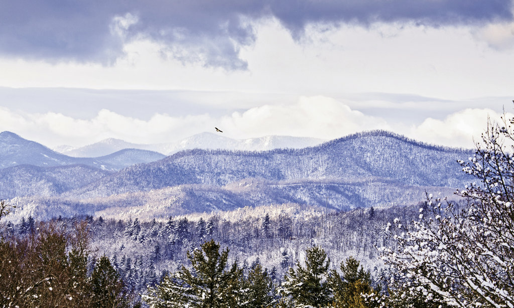 eye in the sky A hawk rides the air currents above a  snow-blanketed range in Pisgah National Forest.