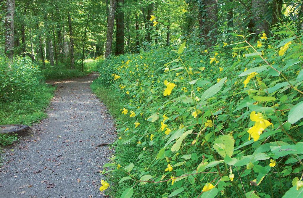 Oconaluftee River Trail, Cherokee