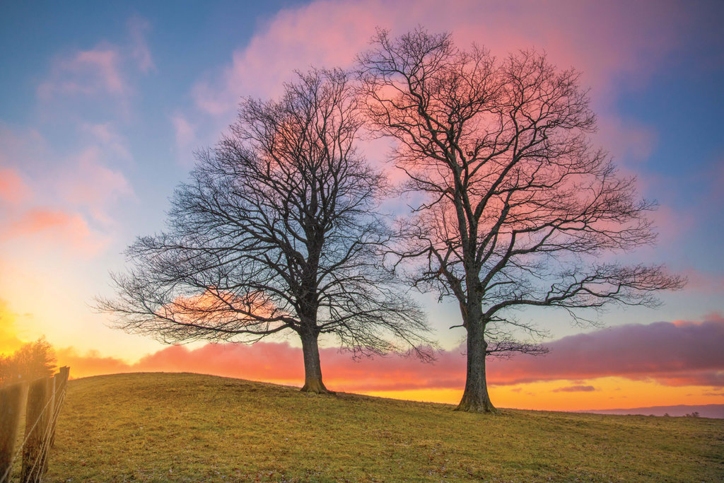 PROFESSIONAL CATEGORY -  Lovely Pair - Justin Potter - Found on the Blue Ridge Parkway just north of Blowing Rock, the composition of these trees and brilliant morning hues stopped Potter in his tracks.