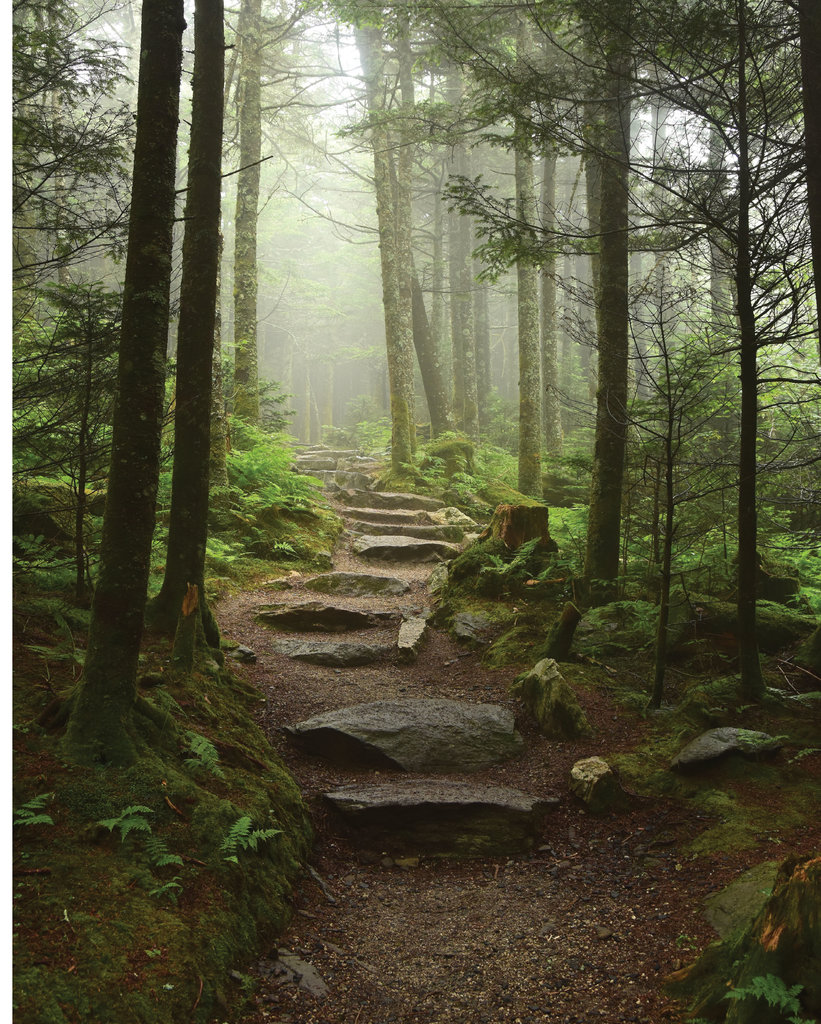AMATEUR CATEGORY  - Foggy Trail - Valerie Seals - A morning hike with her child and foggy conditions set the scene for Seals' dreamy photo, taken near Mount Mitchell.