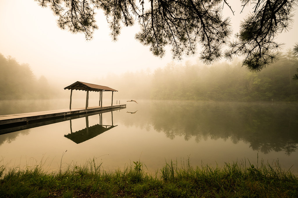 Honorable Mention: Morning Swim by Tom Moors (Professional category)