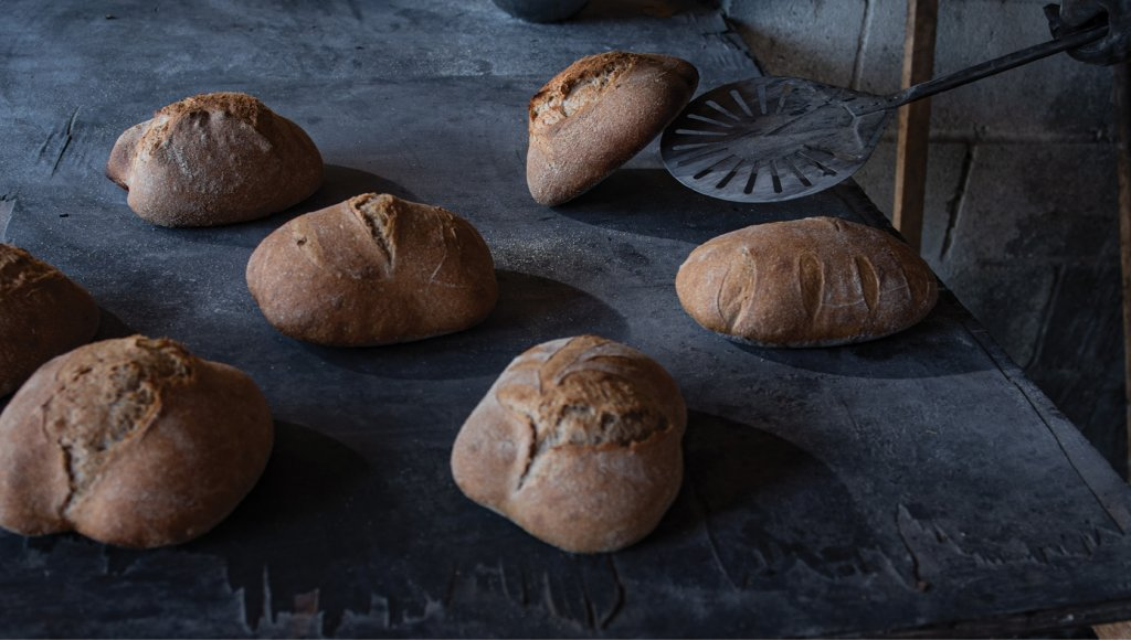An Exact Science Unlike breads made with baker's yeast, sourdough results from the fermentation of dough using naturally occurring lactobacilli and yeast, which gives it its distinct sour taste.