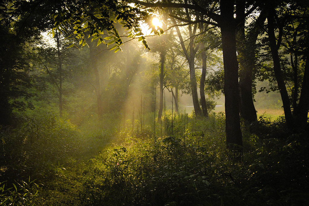 Honorable Mention: Sunbeams and Summer Rain by April Tarjick (Professional category)