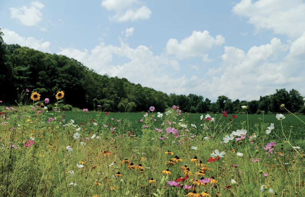 Wildflowers galore at Biltmore Estate. Photo courtesy of the Biltmore Company