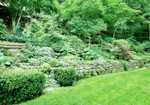 Peter designed this border, visible from a nook in the cottage's kitchen, with layered shapes and textures. The steps are flanked by clipped  Euonymus japonica. Maidenhair and Japanese holly ferns, hostas, and Japanese forest grass make up the floor of the bed. White enkianthus, a small flowering tree with vivid fall color, grows at the back, and a spot of color is provided by blooming Satsuki azaleas.