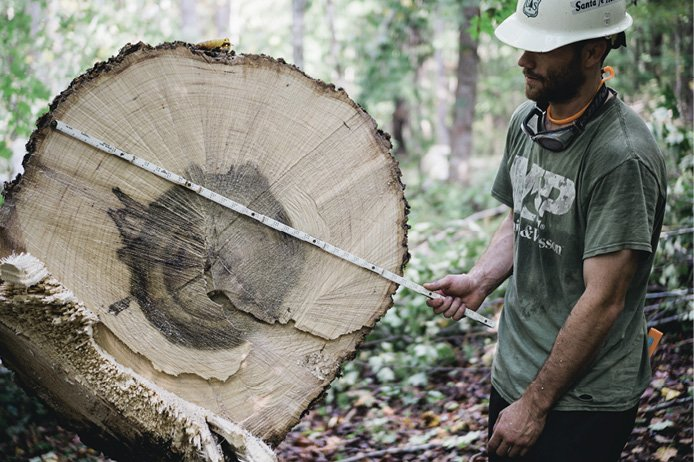 Survey Says - Nathan Mullins evaluates the commercial potential of a fallen tree before the horses transport it to a hauler waiting at the roadside.
