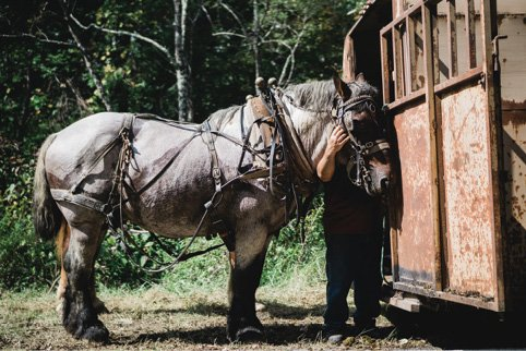 On the Job - Horse loggers say their animals are more reliable than heavy machinery, and easier on fragile forest soils.