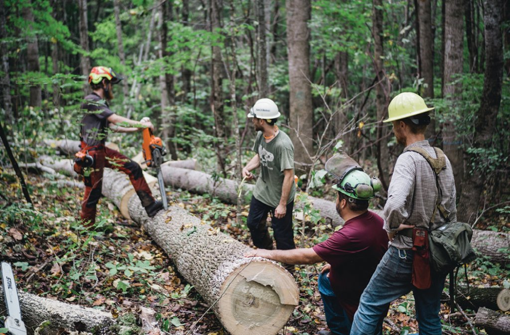 Careful Calculation - Horse wrangler Chad Miano (second from right above) works out the safest and most efficient transportation route with the loggers before hitching his team to the trunk. At right,