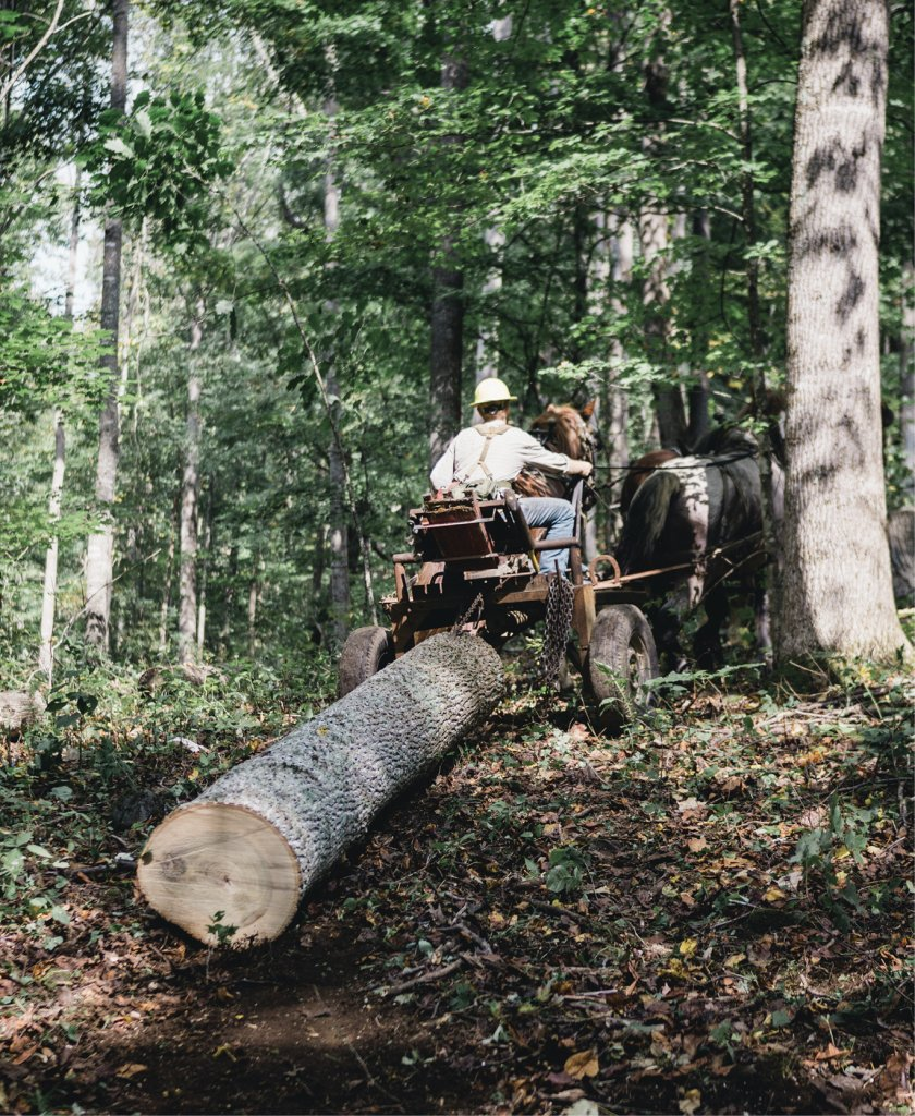 A Cut Above - The loggers rely on precisely tuned chain saws and teams of massive Suffolk draft horses. A team can quickly and nimbly remove lengths of timber from the woods.