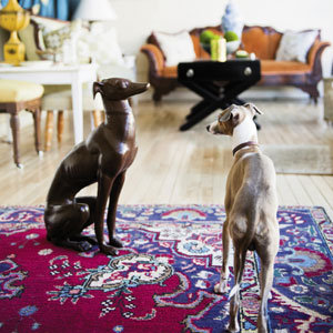 Italian greyhound, Zack, inspects his statuesque doppelgänger.