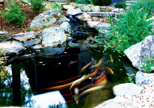 """Paradise Found: the pond is a favorite spot. """"The koi are like pets,"""" says Michelle. """"They see you walking by and steam over to you."""""""