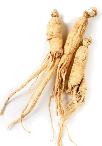 With roots that look like the form of a doll, ginseng is one of WNC's most exported and favored plants. It's used to treat ailments ranging from dry cough to poor digestion and insomnia.