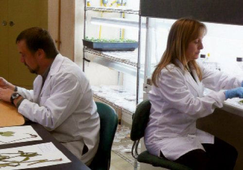 Jeffry Levi prepares a voucher while Dr. Joe-Ann McCoy isolates endophytes in the lab on the campus of the North Carolina Arboretum. Opposite, McCoy places specimens she  collected into a plant press, the first step in voucher preparation