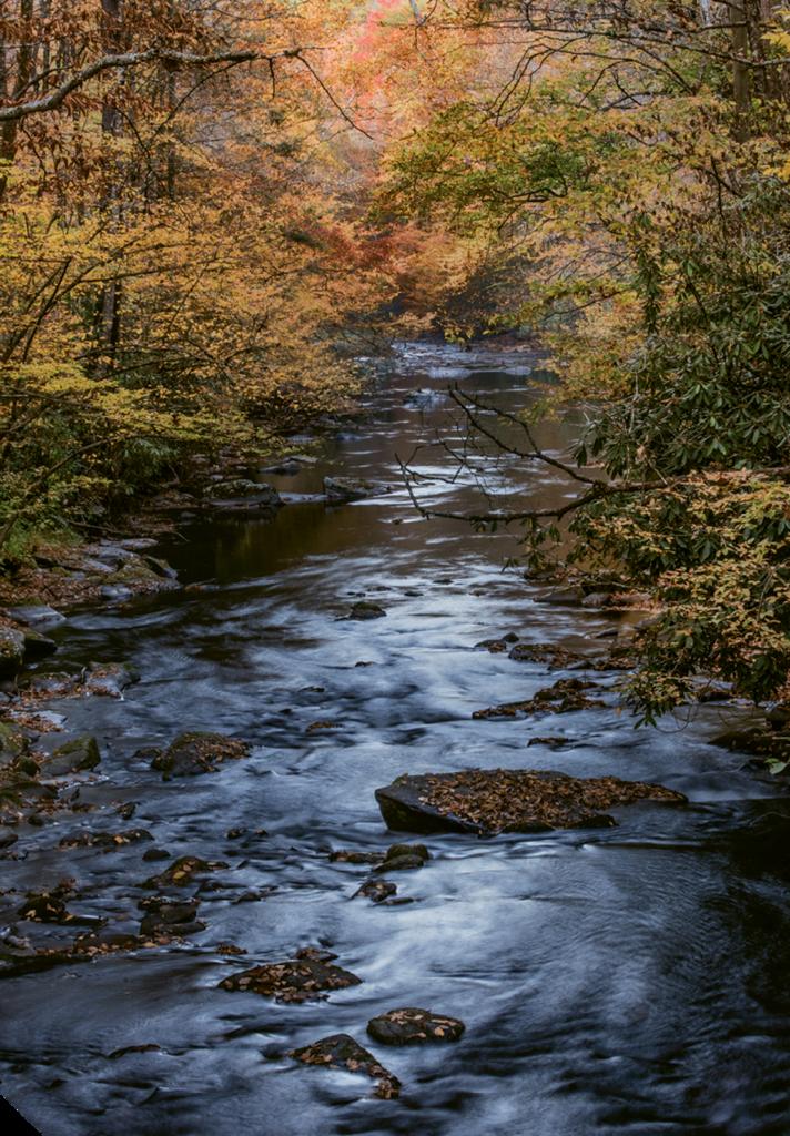 3. Cataloochee Creek
