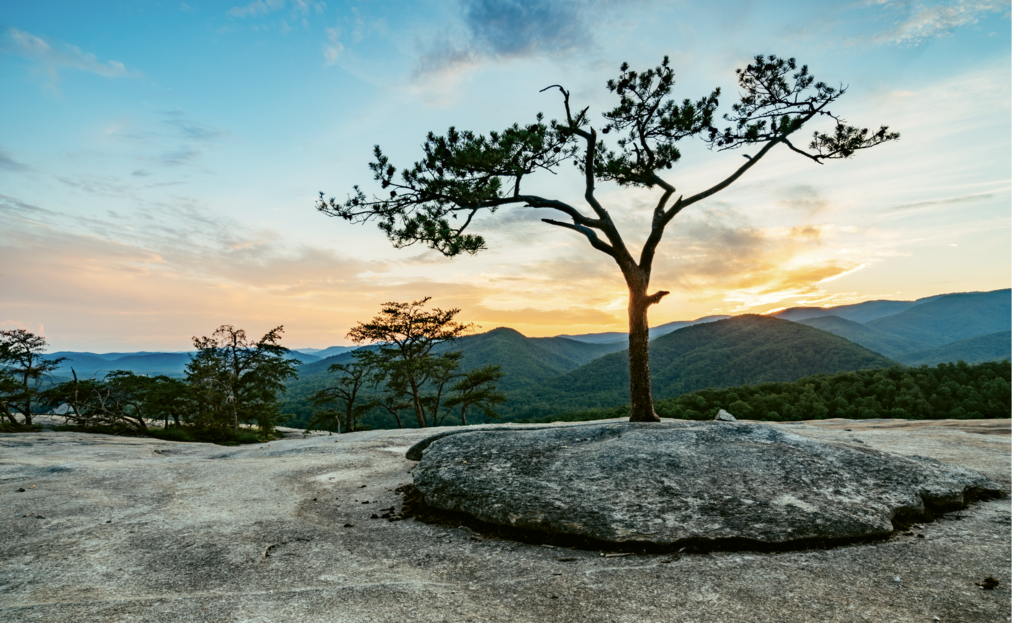 Segment 6 - View From the Top Stone Mountain's granite dome and sparse vegetation provide for unobstructed panoramas in all directions.